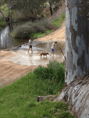 Boys playing along the Bremer River- Harvey Hay Sales covering Hartley / Strathalbyn / Fleurieu / Adelaide Hills & Murray Mallee
