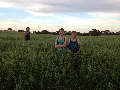 Oaten Crop Wintaroo Harvey Hay Sales covering Hartley / Strathalbyn / Fleurieu / Adelaide Hills & Murray Mallee