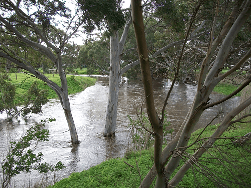 Filling up of the Bremer River at Hartley after heavy rains in the hills - Harvey Hay Sales covering Hartley / Strathalbyn / Fleurieu / Adelaide Hills & Murray Mallee