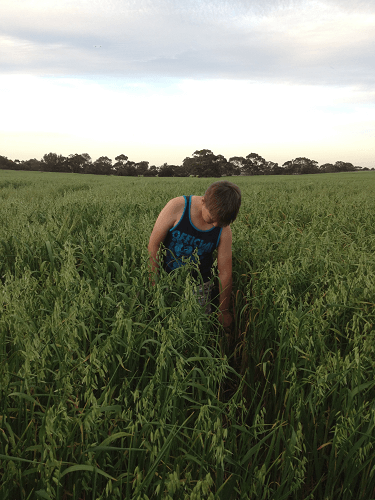 Oaten Crop Sam Harvey standing in field of Wintaroo Oats Hartley / Strathalbyn SA
