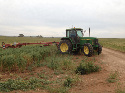 Conditioner Mower in our Oaten Crop for New Seasons Oaten Hay Harvey Hay Sales Hartley