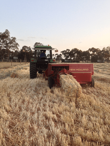 Moisture at optimum levels to start baling Oaten Hay - Harvey Hay Sales covering Hartley / Strathalbyn / Fleurieu / Adelaide Hills / Fleurieu & Murray Mallee