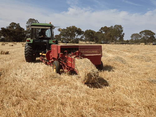 Early morning baling when moisture levels are at there optimum for Wheaten Hay - Harvey Hay Sales covering Hartley / Strathalbyn / Fleurieu / Adelaide Hills / Fleurieu & Murray Mallee
