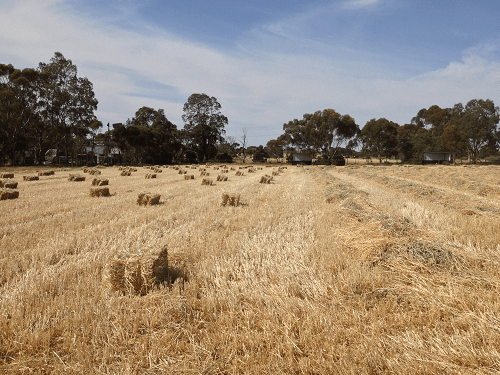 Freshly baled Wheaten Hay - Harvey Hay Sales covering Hartley / Strathalbyn / Fleurieu / Adelaide Hills / Fleurieu & Murray Mallee