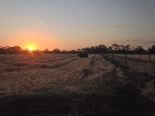 Baling on dusk for Wheaten Hay - Harvey Hay Sales covering Hartley / Strathalbyn / Fleurieu / Adelaide Hills / Fleurieu & Murray Mallee