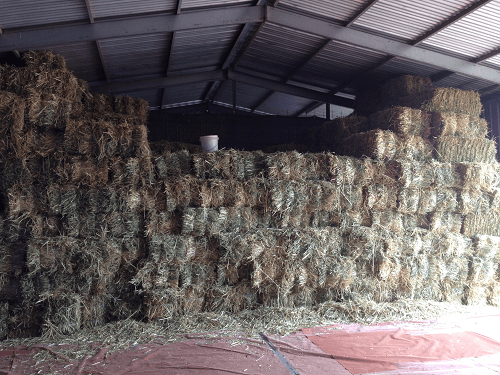 Carting Hay into the sheds - Harvey Hay Sales covering Hartley / Strathalbyn / Fleurieu / Adelaide Hills & Murray Mallee