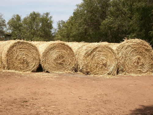 Round Oaten Hay bales - Harvey Hay Sales covering Hartley / Strathalbyn / Fleurieu / Adelaide Hills & Murray Mallee