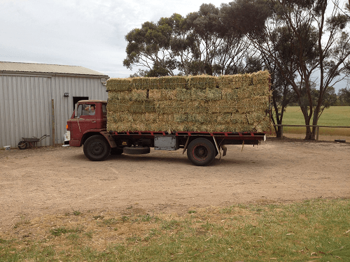 Carting small squares of Oaten Hay to the sheds - Harvey Hay Sales covering Hartley / Strathalbyn / Fleurieu / Adelaide Hills & Murray Mallee